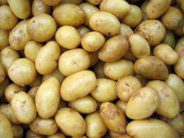 sort-kartofelya-adretta