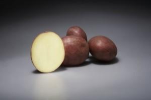 sort-kartofelya-alvara