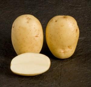 sort-kartofelya-argos