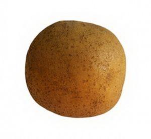 sort-kartofelya-arhideya