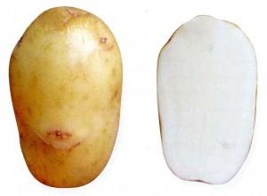 foto-sorta-kartofelya-avrora