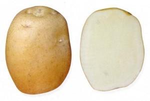 sort-kartofelya-batya