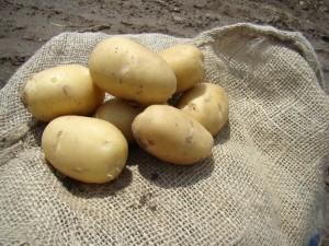 sort-kartofelya-bonus