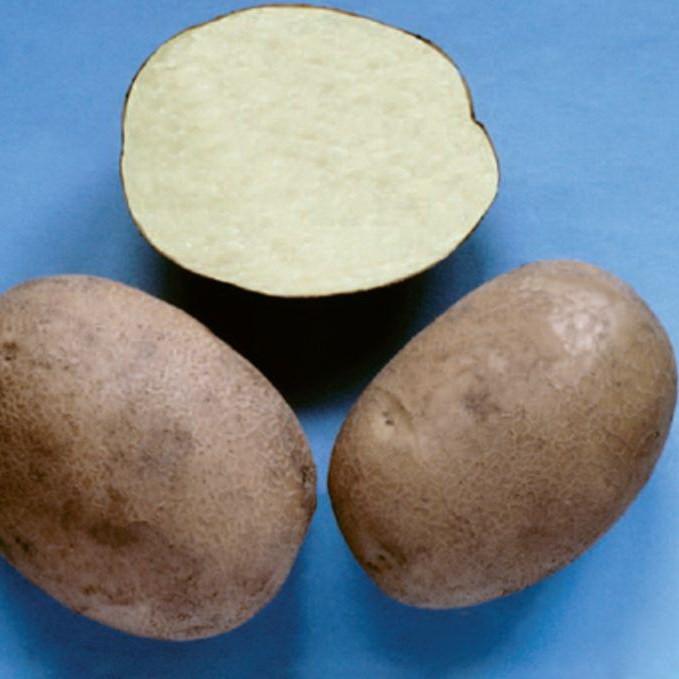 sort-kartofelya-briz