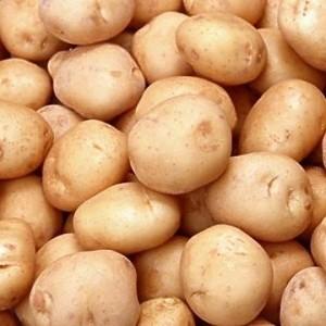 sort-kartofelya-bronnickij