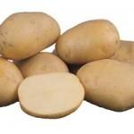 Описание сорта картофеля «Брянский ранний»