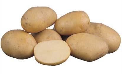 картофель брянский надежный фото