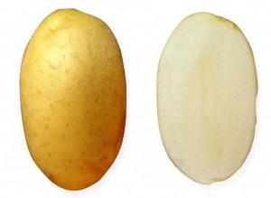sort-kartofelya-vdohnovenie