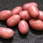 Описание сорта картофеля «Дезире»