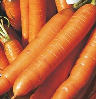 foto-sorta-morkovi-arbulak