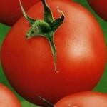 Описание сорта томата (помидора) «Аббат»