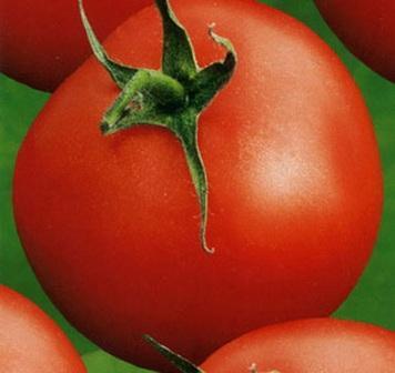 foto-sorta-tomata-pomidora-abbat