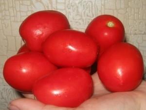 foto-sorta-tomata-pomidora-adelina