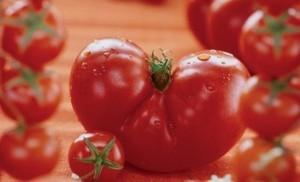 foto-sorta-tomata-pomidora-admiraltejskij