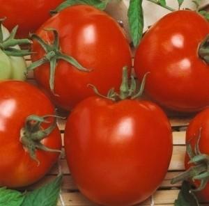 foto-sorta-tomata-pomidora-agitator