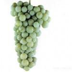 Описание сорта винограда «Дольчатый»