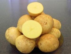 sort-kartofelya-gala