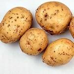 Описание сорта картофеля Весна белая