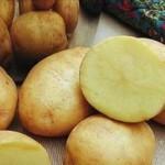 Описание сорта картофеля Ветеран