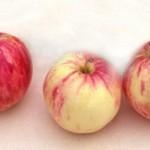 Описание сорта яблони Абориген