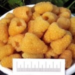 Описание сорта малины Золотая осень