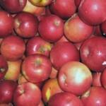 Описание сорта яблони Айдаред