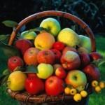Описание сорта яблони Алпек
