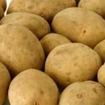 Описание сорта картофеля Европрима