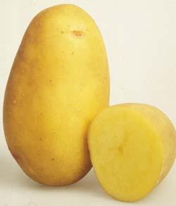 foto-sorta-kartofelya-kolette