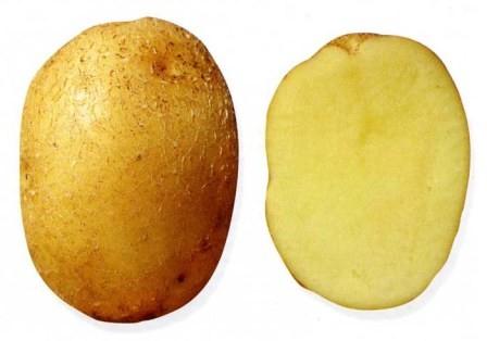 foto-sorta-kartofelya-kolobok