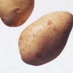 Описание сорта картофеля Красавица