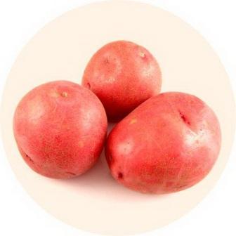 foto-sorta-kartofelya-krasnaya-roza