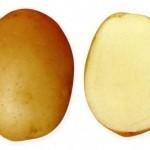 Описание сорта картофеля Крепыш