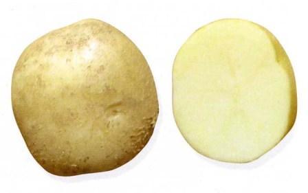 foto-sorta-kartofelya-lakomka