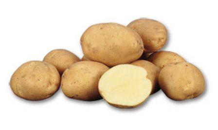 foto-sorta-kartofelya-ledi-kler
