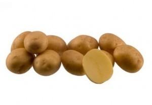foto-sorta-kartofelya-madeline
