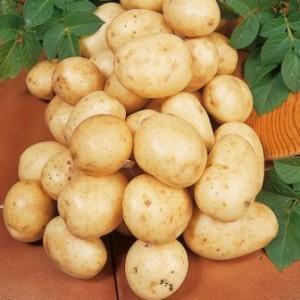 foto-sorta-kartofelya-navan