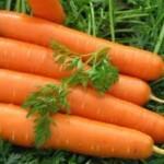 Описание сорта моркови Долянка