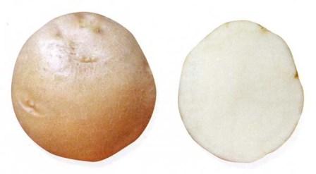 foto-sorta-kartofelya-nikulinskij