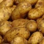 Описание сорта картофеля Пантер