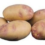 Описание сорта картофеля Пикассо