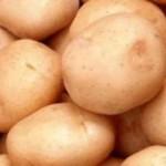 Описание сорта картофеля Погарский