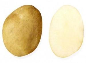 foto-sorta-kartofelya-ramzaj