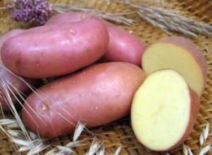 foto-sorta-kartofelya-red-skarlett-1