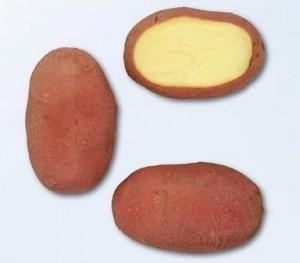 foto-sorta-kartofelya-red-skarlett