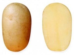 foto-sorta-kartofelya-russkij-suvenir