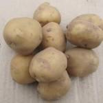 Описание сорта картофеля Скороплодный