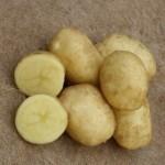 Описание сорта картофеля Спринт