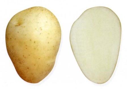 foto-sorta-kartofelya-charodej