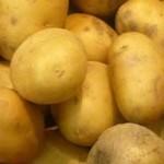 Описание сорта картофеля Эл мундо